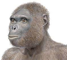 Ardipithecus ramidus es una especie extinta de homínido, probablemente un hominino y quizá un ancestro del hombre. En Etiopía fueron encontrados los primeros restos.