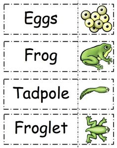 Frog Life Cycle Printable ~ Preschool Printables Child's place has a sequence of black and white dra Frogs Preschool, Kindergarten Science, Preschool Themes, Preschool Printables, Preschool Lessons, Preschool Classroom, Frog Activities, Sequencing Activities, Pond Animals