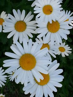 I love daisies...they're so friendly and happy.