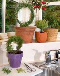 DIY Home Decor :Small-scale Topiaries : DIY Topiaries