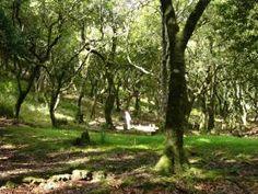 Laurel forest of Madeira, Spain