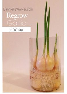 How to Regrow Vegatables in Water Water Garden, Garden Plants, Indoor Plants, Sweet Potato Plant, Indoor Vegetable Gardening, Kitchen Plants, Nature Decor, Diy Craft Projects, Diy Crafts