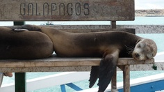 Into The Wild - A Seven Night Galapagos Island Expedition