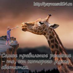 #консультациявсети #психолог #психология
