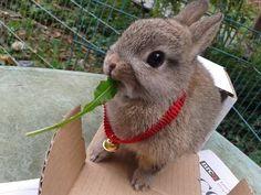 Cute Baby Bunny Rabbit (RESCUED) So Adorable! Exploring blanket in bedroom.. - YouTube