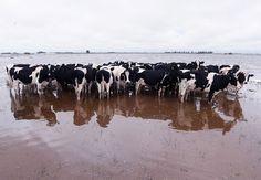 Desde hace 16 meses General Villegas está afectada por las inundaciones, que causaron pérdida de cosechas, evacuación de hacienda, cierre de más de 30 tambos y la pérdida de trabajo de 450 peones rurales. Las inundaciones en la localidad bonaerense d