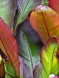 Tropical Plants For Sale - Buy Tropical Plants in the UK today ...