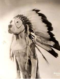 Petey the famous Little Rascal pitbull