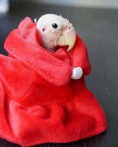 Cute Birds, Keep Warm, Beautiful Birds, Lions, Funny Animals, Dinosaur Stuffed Animal, Naked, Instagram Posts, Color Red
