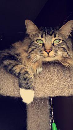 Niko Cats, Photography, Animals, Gatos, Photograph, Animales, Animaux, Fotografie, Photoshoot