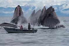 Whooh, if you look at the whale on the right it looks just like a huge wing !!