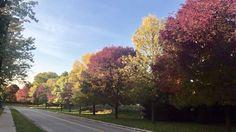 Aaah O Canada! Lindo como sempre, outono se tornou minha estação favorita, o festival de cores  pelas ruas me encantam!