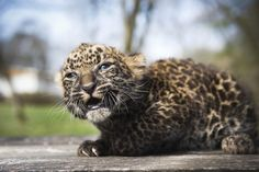 Zoo Babies 2012: Adorable Baby Animal Pictures From Around The World (PHOTOS)