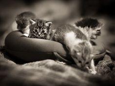 It looks like a life boat of kitties :)