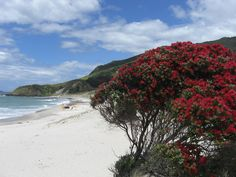 Pohutukawas and white sandy beaches in Northland New Zealand Holidays, Ocean Sounds, Relaxing Places, New Zealand Travel, Sandy Beaches, Ocean Beach, Travel Inspiration, Places To Go, Around The Worlds