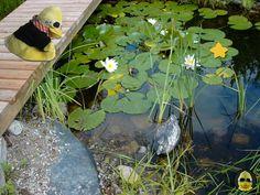 Wo ist denn hier ein #Stern? Wo muss ich denn hin?? ⭐️⭐️ #ibes #ibes2019  #bigb #bigbird #cooler #gelber #erpel #enterich #vogel #gelbe #ente #schrader #beckum #yellow #duck #bird #plüschi #plushie #plüschtier #kuscheltier #stofftier #schmusetier #fotografier_dein_kuscheltier Aquarium, Star, Stuffed Toys, Bird, Goldfish Bowl, Fish Tank, Aquarius