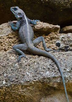 Reptiles And Amphibians, Mammals, Lizard Dragon, Small Lizards, Creature Picture, Tortoise Turtle, Cute Wild Animals, Animal Antics, Crocodiles