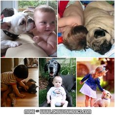 lovely dogs and babies