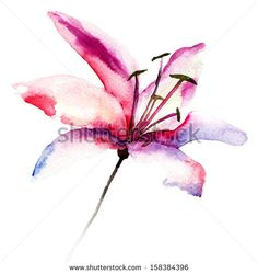 Beautiful Lily flowers, watercolor illustration by Regina Jershova, via Shutterstock