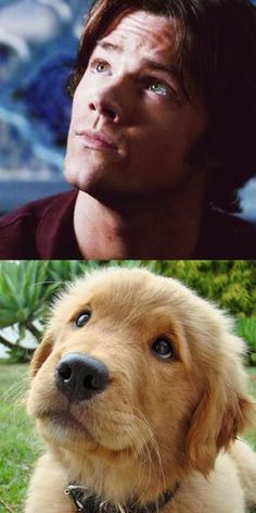 Wow that puppy does a really good Jared Padalecki impersonation, this is perfection