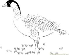Nene State Bird Of Hawaii Dot To Printable Worksheet