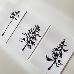 Moon Photos, Black Tree, A5, Bloom, Instagram, Prints