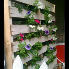 Pflanzen Gefässe-Holzpaletten Blumenkasten