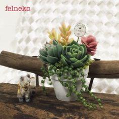 felneko 粘土で作る多肉植物 Air Plants, Garden Plants, Cactus, Miniature Plants, Diy Dollhouse, Cold Porcelain, Cacti And Succulents, Clay Projects, Dollhouses