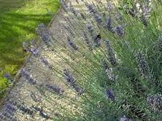 r sultat de recherche d 39 images pour plantes fleuries bordure all e all es jardin pinterest. Black Bedroom Furniture Sets. Home Design Ideas