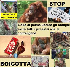 STOP PALM OIL!!!