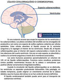 Infografía Neurociencias: Líquido cefalorraquídeo o cerebroespinal.   Asociación Educar