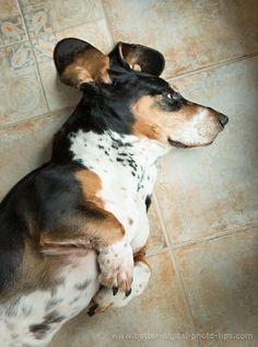 Pet composition tips