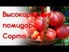 Высокорослые помидоры. Лучшие сорта - YouTube