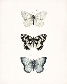 Beautiful, antique butterfly illustrations grouped together in an eye-catching collection. The butterflies are adapted from an antique