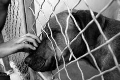 'Shelter Me' is a heart-breaking film about the life of shelter dogs airing on PBS. Click for information & air times.