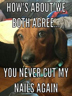 14 Funny Dachshund Memes To Cheer You Up Dachshund Funny, Dachshund Quotes, Dachshund Art, Long Haired Dachshund, Dachshund Puppies, Dog Quotes, Funny Dogs, Daschund, Funny Dachshund Pictures