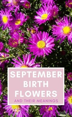 Just like birthstones, there are birth month flowers for every month of the year.  Take a look at the September birth flowers - Aster and Morning Glory - and their symbolism. #flowers #floralgifts #growingfamily