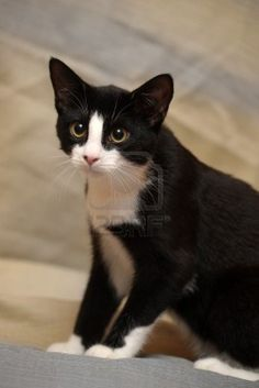 black and white cat i know i already hav a picture like this but this cat looks almost EXACTLY LIKE MINE FREAKY!!!!!!