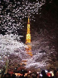 東京タワーと夜桜 #sakura 桜 さくら #Japan
