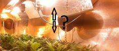 ¿Cuál es la distancia adecuada del foco a las plantas de marihuana? - http://growlandia.com/marihuana/cual-es-la-distancia-adecuada-del-foco-a-las-plantas-de-marihuana/