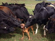 25 animales felices