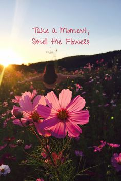 Slow Travel - Take a Moment, Smell the Flowers