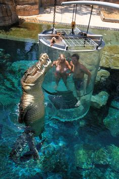 Thrill-seeking holidaymakers can now risk a face-to-face encounter with a Saltwater crocodile separated only by a thin plastic barrier Beautiful Vacation Spots, Beautiful Places To Travel, Cool Places To Visit, Vacation Places, Dream Vacations, Vacation Trips, Vacation Ideas, Outdoor Reisen, Saltwater Crocodile