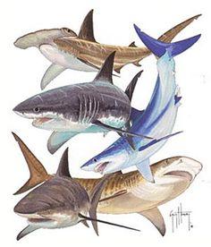 Guy Harvey - Long Sleeve T-Shirt - Marlin Boat - White (Size & Left) Shark Illustration, Save The Sharks, Shark Photos, Shark Art, Shark Tattoos, Sea Life Art, Great White Shark, Ocean Creatures, Shark Week