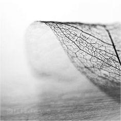 Leaf | dry | fractal | black and white