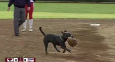 Playful Pit Bull steals baseball gloves during softball game (VIDEO)