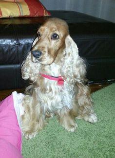 (7) SENASA Webmail :: ¿Te interesa el tema Cachorros? Echa un vistazo a los Pines recomendados en Cachorros