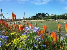 Ile de Batz faune & flore   Finistère Bretagne