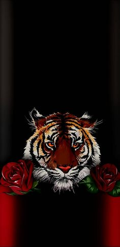 Tiger wallpaper by quebrao55 - 42 - Free on ZEDGE™