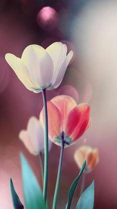 fond d'écran huawei - di sfondo iphone -samsung - huawei Lotus Flower Wallpaper, Flower Background Wallpaper, Rose Wallpaper, Flower Backgrounds, Beautiful Flowers Wallpapers, Pretty Wallpapers, Art Floral, Tulips Flowers, Pretty Flowers